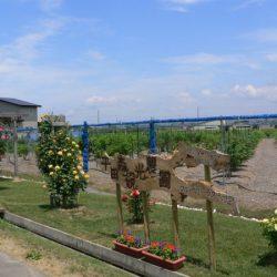平田森観光農園