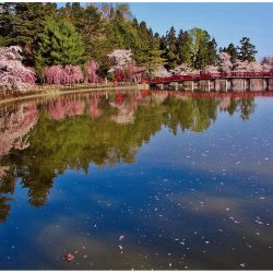 平川市おのえ花(さくら)と植木まつり4/27~5/6開催!