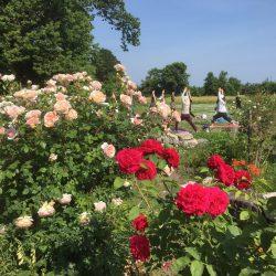 風薫るバラの園でモーニングヨガ2020