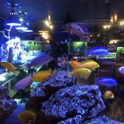熱帯魚とお食事処 風の谷